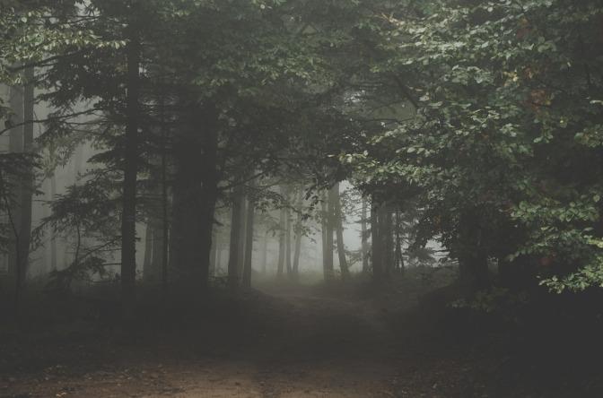 forest-1031022_960_720.jpg